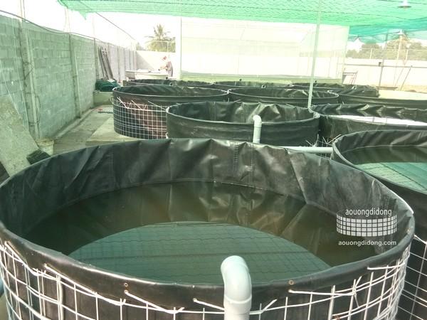 Chuẩn bị bể lót bạt nuôi cá trê