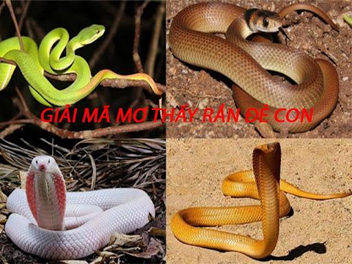 Điềm báo mơ thấy rắn đẻ con đánh con gì?